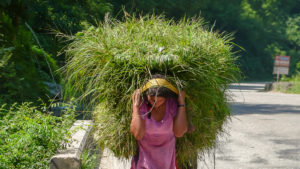 Woman carrying heavy load of grass
