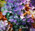 Love is Flower Photo